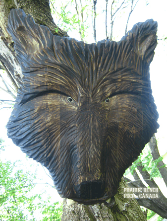 prairie bench wolf shield 1