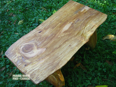 pb yellow cedar stand1