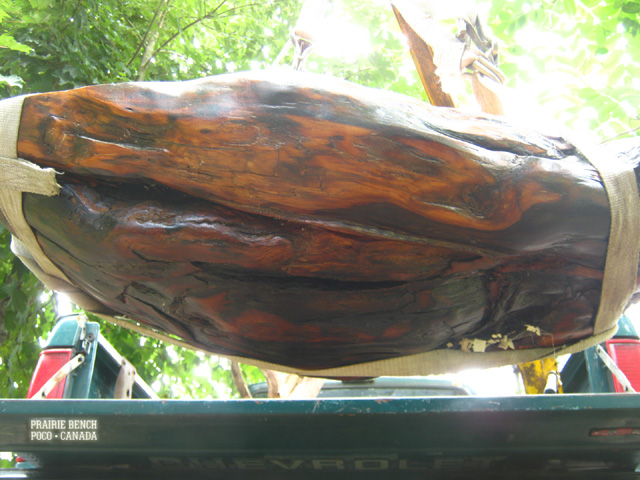The large burl is lowered by crane and eased into its cradle